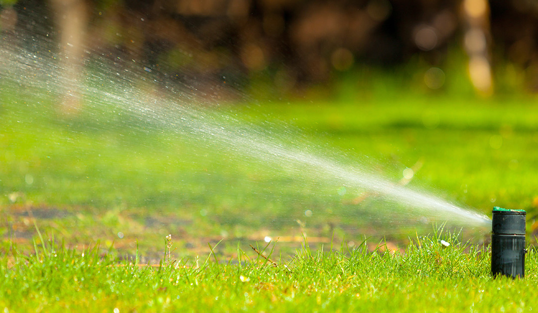 What You Should Expect from Your Landscaping Service in March